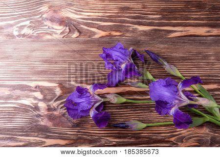 Wooden background with iris flowers. Fresh iris flowers
