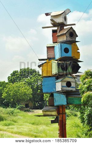 Colorful Bird Houses - Beautiful bird houses in a jungle