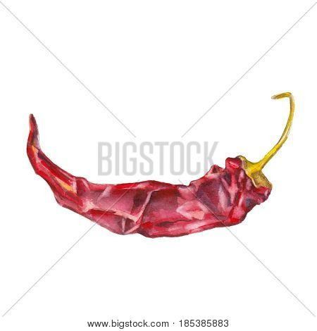 The red dried chile pepper on white background watercolor illustration in hand-drawn style.