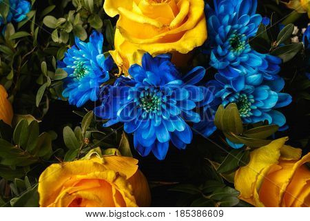 Blue Chrysanthemum And Yellow Roses As Background. The Blue Chrysanthemum Flower, Close Up, Macro. F