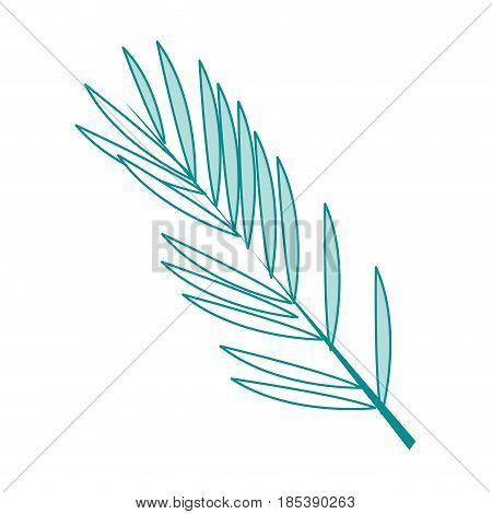 blue silhouette image ramification with elongated leaves vector illustration