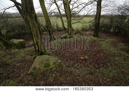 Remains Of Megalithic Tomb Neu Negentin In Mecklenburg-vorpommern, Germany