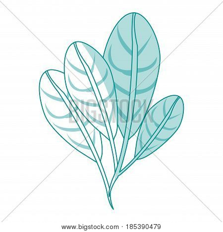 blue silhouette image set elongated leaves with ramifications vector illustration