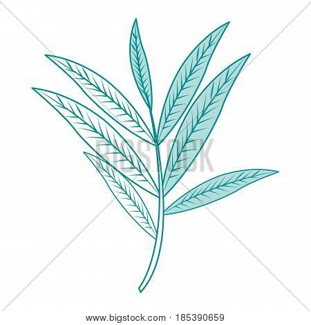 blue silhouette image branch with elongated leaves vector illustration