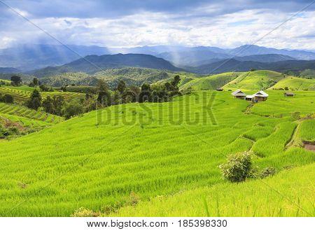 Fresh green rice terrace field and cloudy sky in rainy season, at Baan Pa Bong Pieng, northern of Chiang Mai Thailand.