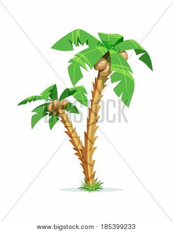 Two tropical palm with coconut. Exotic tree. Isolated white background. Vector illustration.