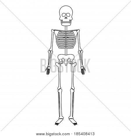 skeleton human bones skull medicine line vector illustration