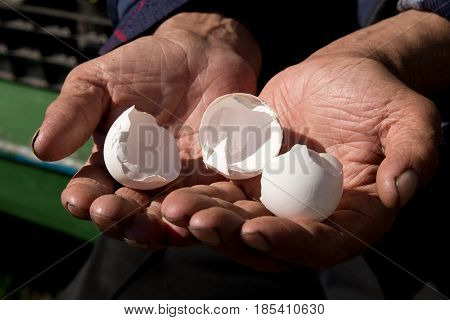 Empty Egg Shells In The Hands Of An Elderly Person. The Concept Of Poverty In Retirement.