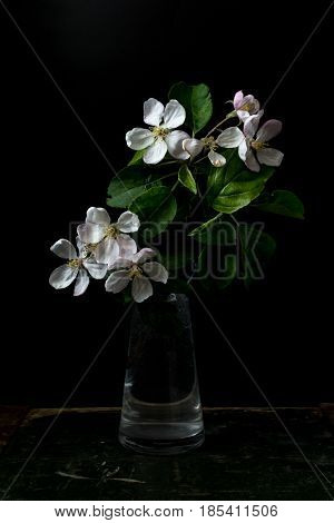 Blossom flowers in vase isolated on a black background shallow depth of field low key selective focus