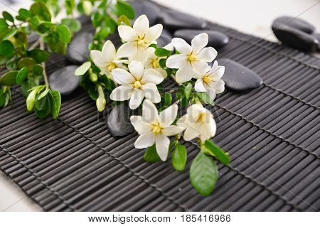 branch gardenia closeup with pile of black stones on mat