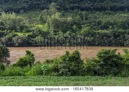 Taquari River And Forest