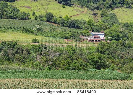 Farm , House And Plantation