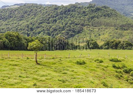 Plantation And Forest