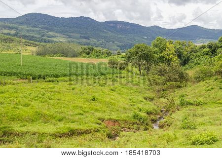 Plantation And Stream