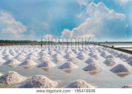 Mass of salt in the salt sea salt farm