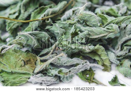 Dried common horehound herb (Marrubium vulgare) background