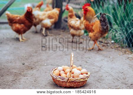 a basket full of natural chicken eggs from the farm
