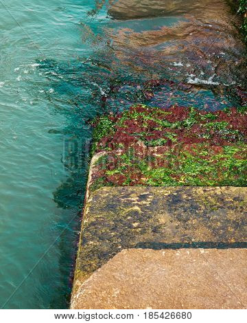 Steps covered in green algae leading down into the sea / water.