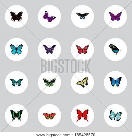 Realistic Sky Animal, Azure Peacock, Butterfly And Other Vector Elements. Set Of Beauty Realistic Symbols Also Includes Red, Bluewing, Beautiful Objects.