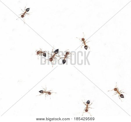 ants on a white wall . A photo