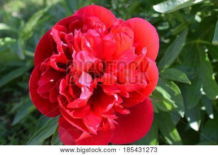 Vegetation awakening in the spring, flowering a small garden