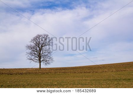 A lone leafless tree in early spring out in the middle of a field