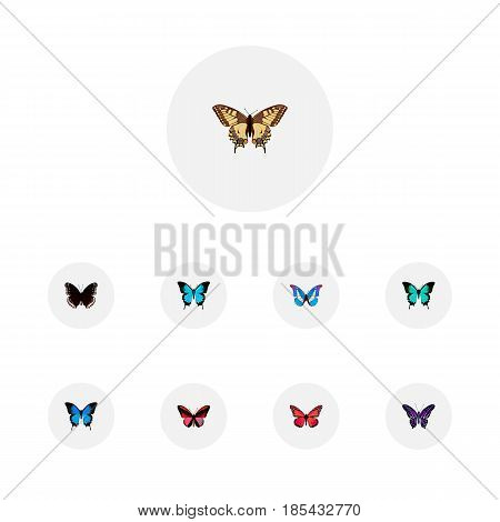 Realistic Common Blue, Tiger Swallowtail, Papilio Ulysses And Other Vector Elements. Set Of Moth Realistic Symbols Also Includes Red, Violet, Hypolimnas Objects.