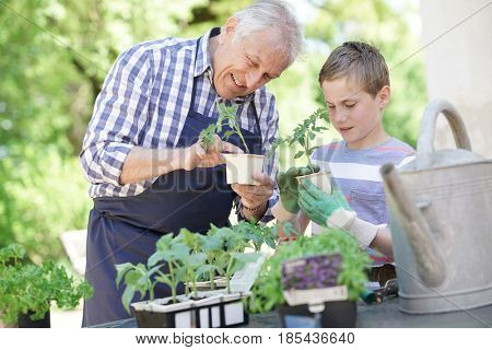 Grandfather with grandson gardening together