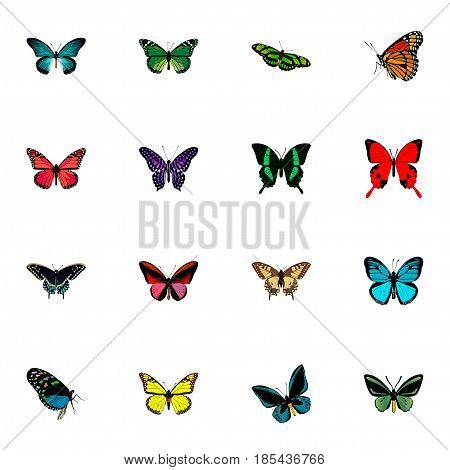 Realistic Morpho Hecuba, Hairstreak, Tropical Moth And Other Vector Elements. Set Of Beauty Realistic Symbols Also Includes Fly, Red, Yellow Objects.