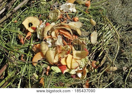 Recycling garden and kitchen waste on a compost heap including grass cuttings carrot tops bean stalks with both fruit and vegetable peelings.