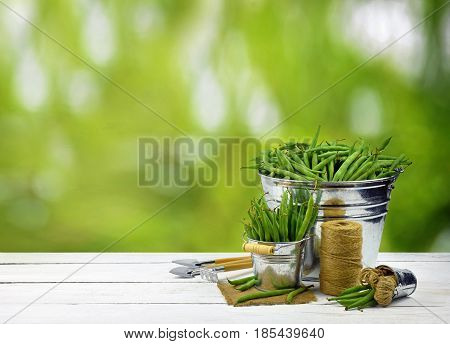 The concept of a healthy diet. Composition on a blurred natural background.Pods of fresh green peas in buckets and garden tools. Concept. . Organic food.