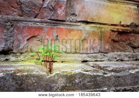 Persistence, determination ,survival ,hope, resilience strength ,winning force of nature. The green plant sprouted through the stones.