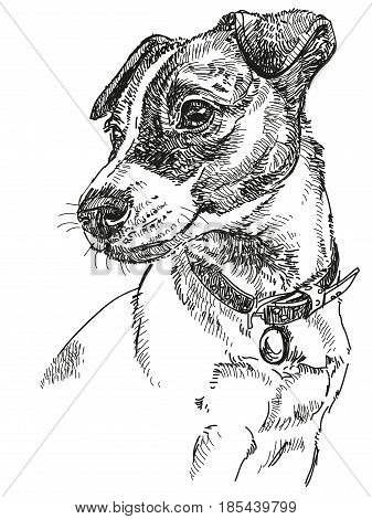 Vector Portrait of dog Jack Russel terrier in black color hand drawing Illustration on white background