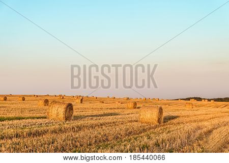 Evening summer field with more hay rolls. Agricultural landscape with straw bales.