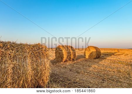 Summer field with hay rolls. Standing close to the straw bales.