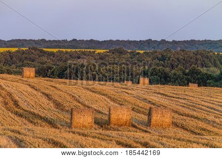 Evening summer field with straw bales. Farmland with hay rolls.