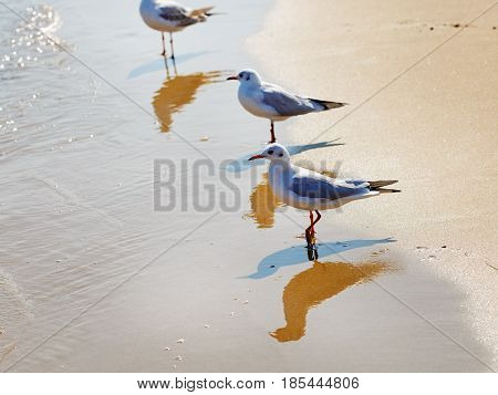 Three gulls on the beach. Seagulls standing in the water on a background of wet sand at the water's edge. Shallow depth of field. Selective focus.