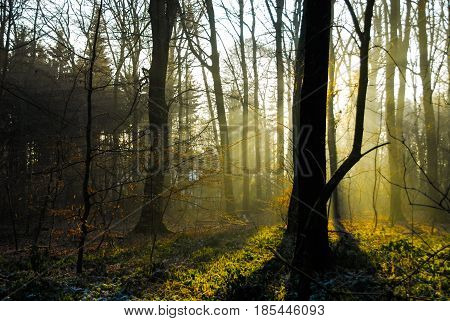 Sunrise sunset in forrest winter no leafs cold fog