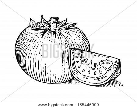 Tomato vegetable engraving vector illustration. Scratch board style imitation. Hand drawn image.