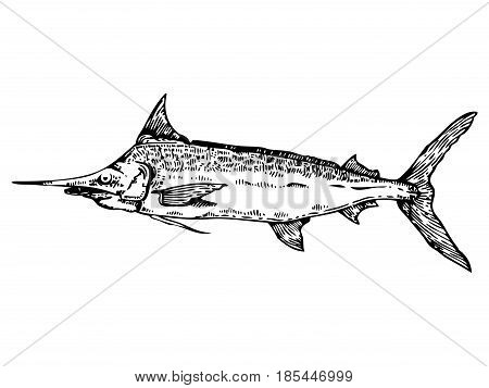 Swordfish engraving vector illustration. Scratch board style imitation. Hand drawn image.