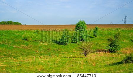 Bright green plants and a wide field under the blue sky outside the city