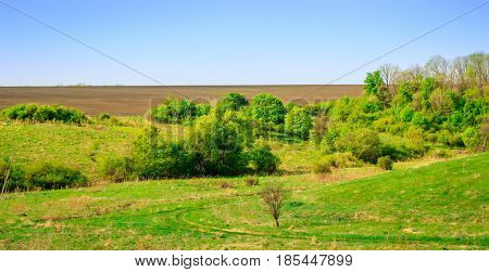Boundless open spaces of nature under a clear blue sky bright green vegetation cover and no one around