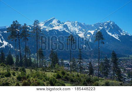 View To Wetterstein Mountain Mass Through Conifers