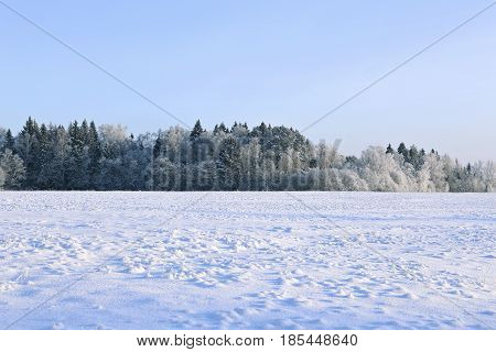 Landscape of snow-covered field and trees are spruce and birch in Russia