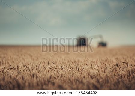 Defocused View Of Combine Harvester Agriculture Machine Harvesting Golden Ripe Wheat Field