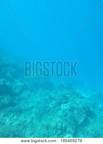 Snorkeling around the drop off around the edge of Mexico