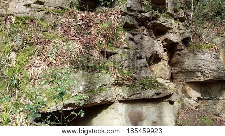 Moss, fern and leaf covered rockface in the woodland