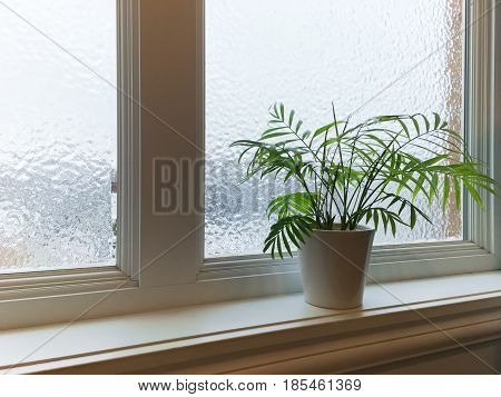 Green plant on a windowsill. Frosted winter window.