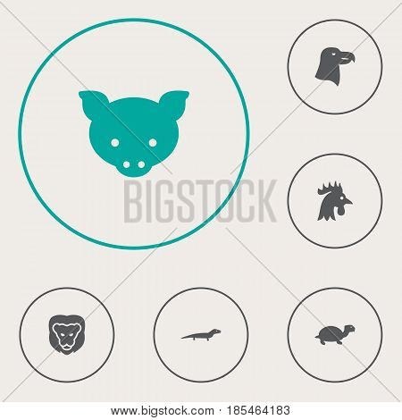 Set Of 6 Brute Icons Set.Collection Of Aquila, Gecko, Wildcat And Other Elements.