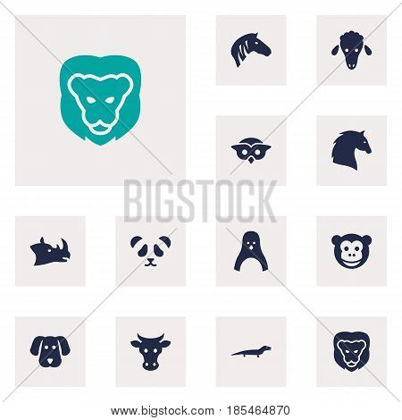 Set Of 12 Beast Icons Set.Collection Of Bear, Horse, Wildcat And Other Elements.